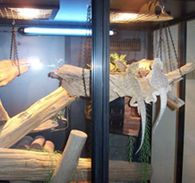 Bearded Dragon in Reptile Safe Cage