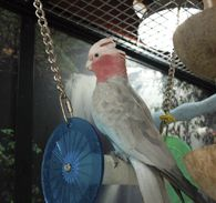 Durable Materials for Cockatoos