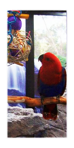 Wooden Decorative Bird Sign Home Decor Not Home Without Eclectus Parrot