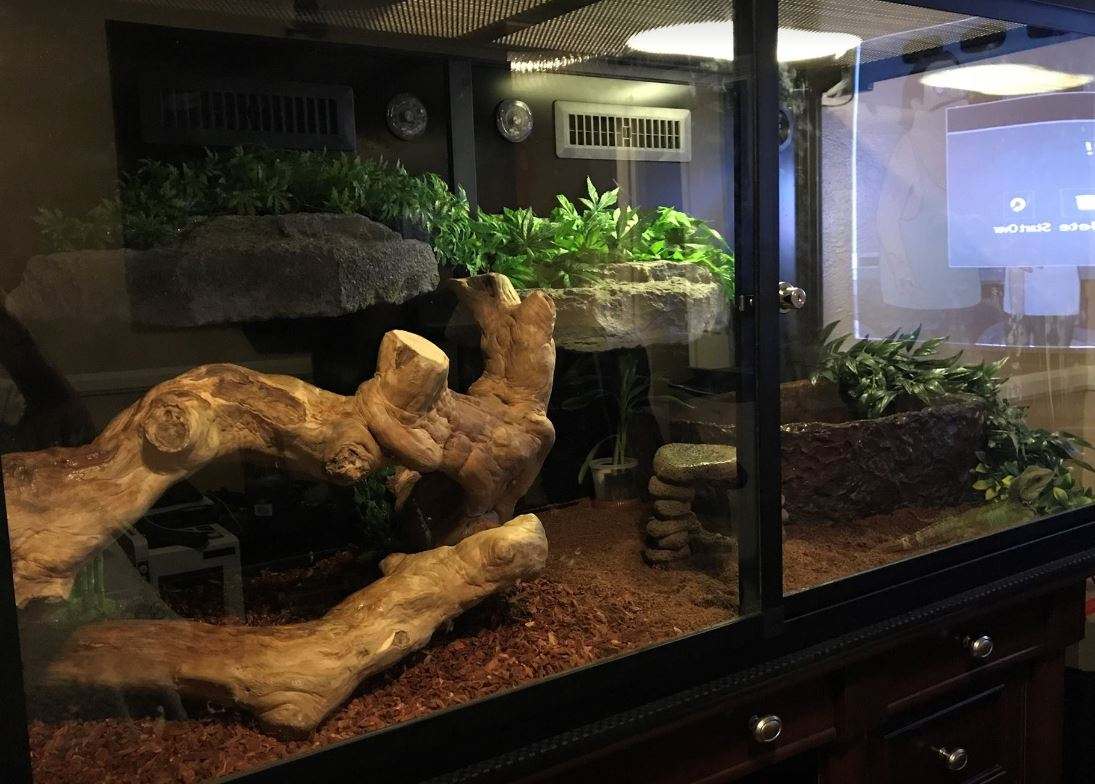 Josh's Chinese Water Dragon Enclosure
